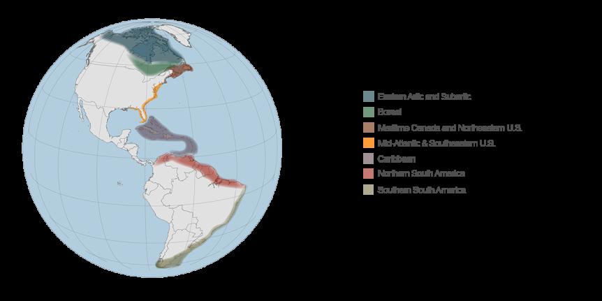 habitats-in-the-atlantic-flyway-featured
